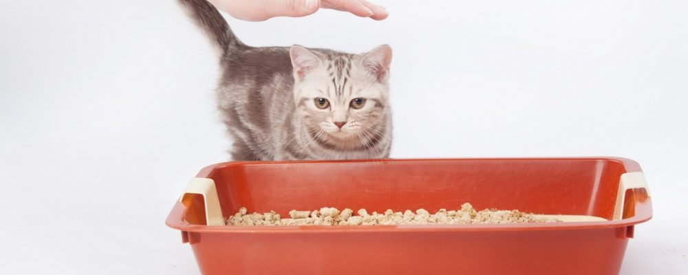 How Often Do I Need To Clean My Cat's Litter Box?