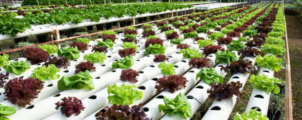 Beginners guide to hydroponics