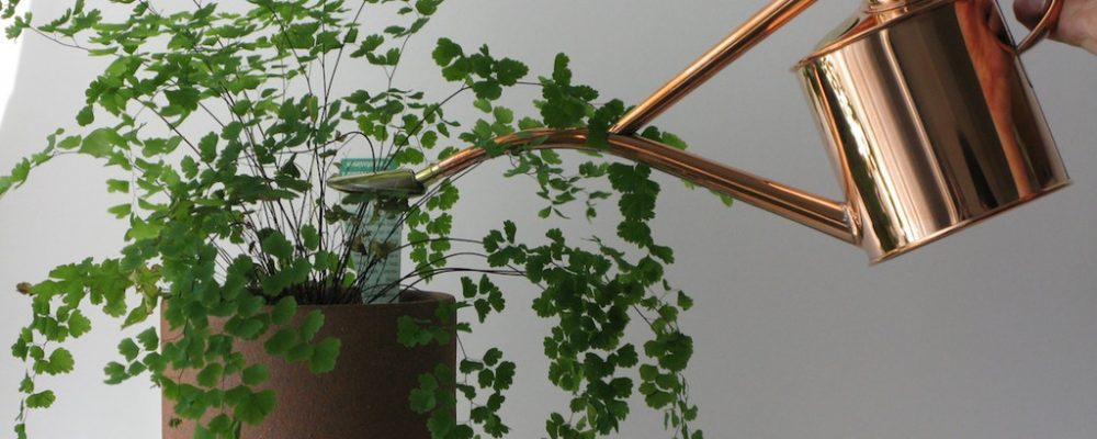 Can Your Indoor Plants Suffer Due to Contaminated Water?