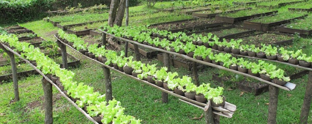 How to Choose Your Organic Gardening Supplies